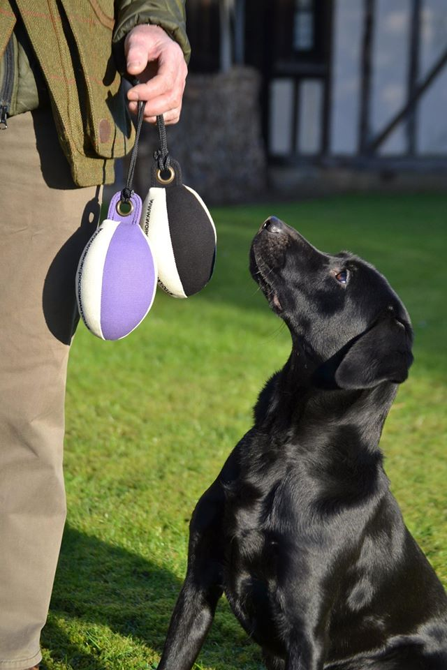 Partridge Scent For Dog Training